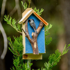 Attract wildlife with species-specific nesting boxes